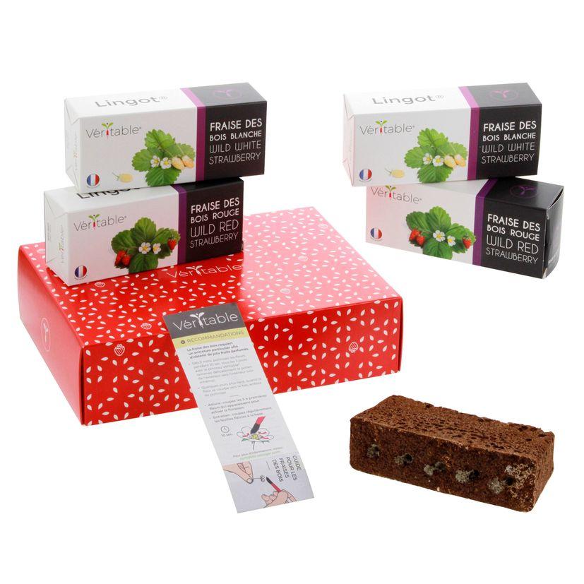 Coffret de recharges et accessoires fraises - Véritable